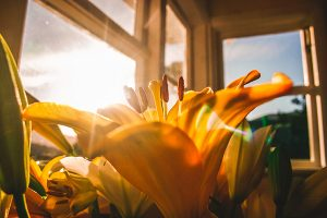 HVAC repair Toms River, Yellow lily shown indoors in ray of bright sunlight